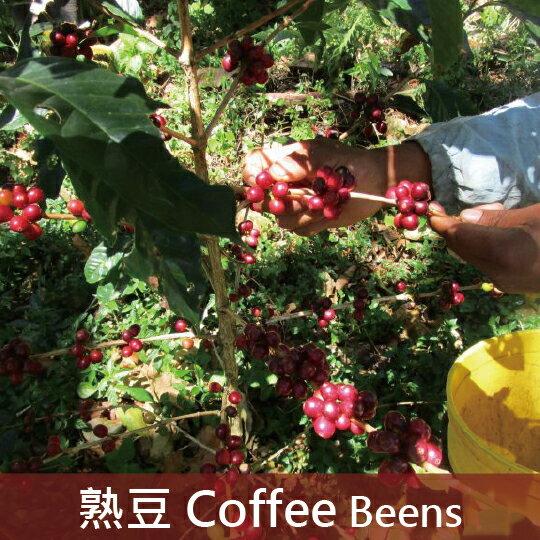 【福璟咖啡】巴拿馬 波魁特 情聖莊園 藝妓/瑰夏 日曬