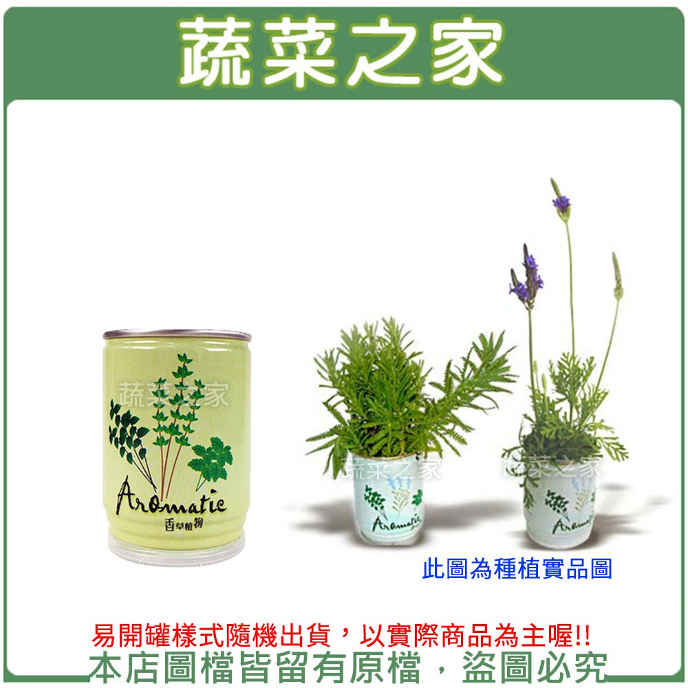 【蔬菜之家004-E04】iPlant易開罐花卉-薰衣草