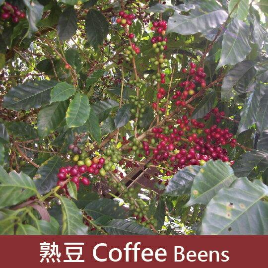 【福璟咖啡】尼加拉瓜 暴風莊園 法蘭西斯柯
