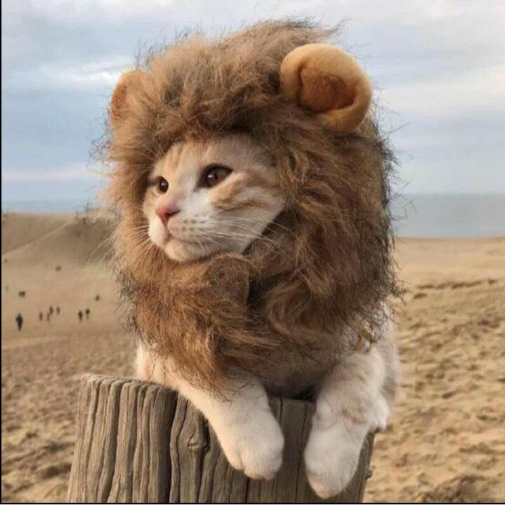 現貨 貓咪變獅子頭套 寵物頭套 貓咪頭套 貓咪獅子頭套 狗頭套【HP02】