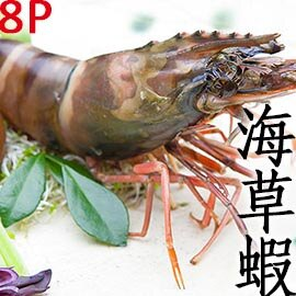㊣盅龐水產 ◇越南草蝦8隻裝◇ 330g/盒 零$220 烤肉 火鍋 餐廳 團購 歡迎批發