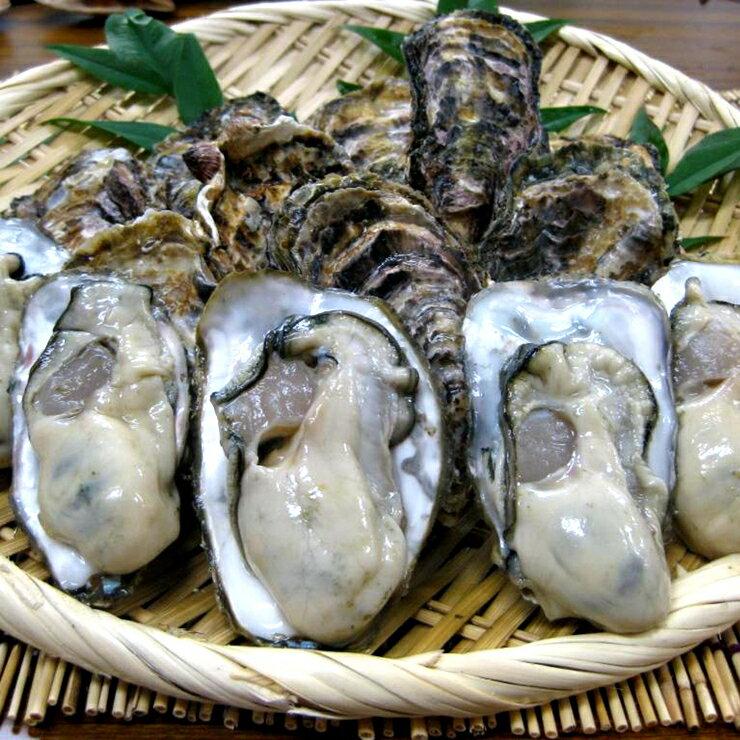 日本播磨灘牡蠣3L(超越廣島牡蠣)