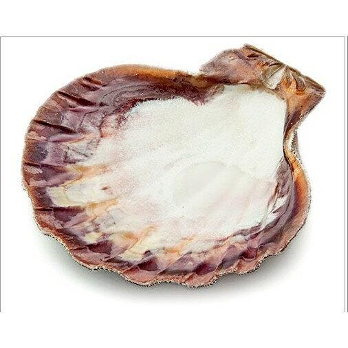 [光之薩滿] 蚌殼 可用於燒白鼠尾草等