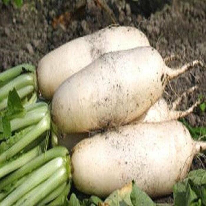 【臻美蔬果】白蘿蔔