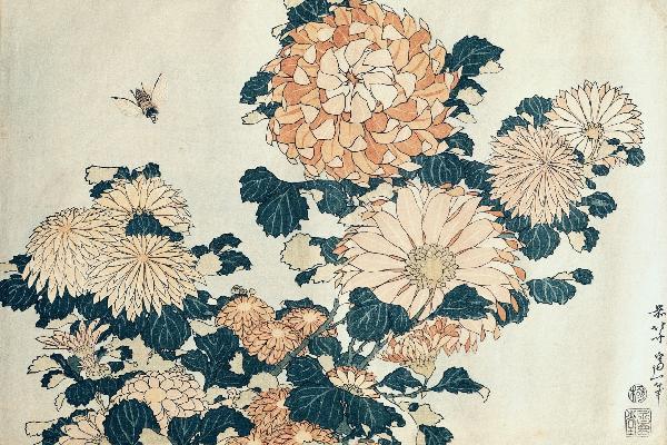葛飾北齋菊花風景畫壁畫訂製客製壁畫e10382