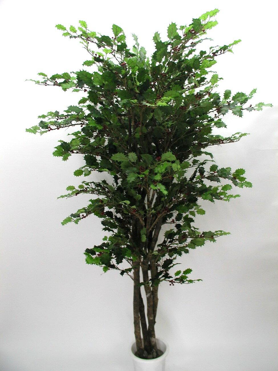 ★超低價★真幹聖誕冬青樹 / 天然樹幹人造樹 空間 景觀 佈置 造景
