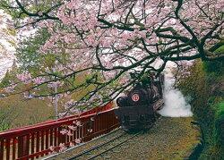 【P2 拼圖】嘉義阿里山蒸汽火車 夜光拼圖 520片 K25-006