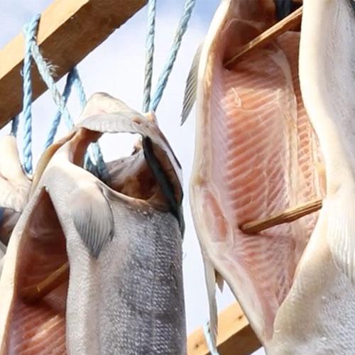 北海道極品-獻上西別鮭-姿半身(約1公斤重) 0