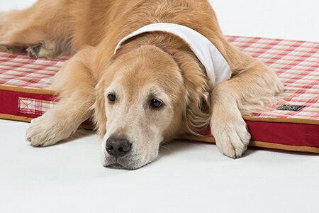 Lifeapp:《Lifeapp》寵物緩壓睡墊L(紅格紋)適用大型犬、長期照護、高齡犬110*70*5cm