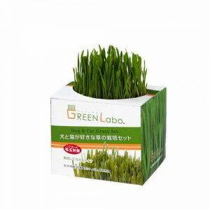 Green Labo DIY 貓草 燕麥草