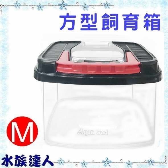 ~水族 ~~飼育箱~~方型飼育盒 M 中型 C~CE~07~飼育盒 藍 綠 紅 3種顏色