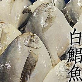 ㊣盅龐水產◇超大白鯧魚7/8◇ 700g-800g/尾 $1070/尾 新年 年菜 尾牙 圍爐 優選食材