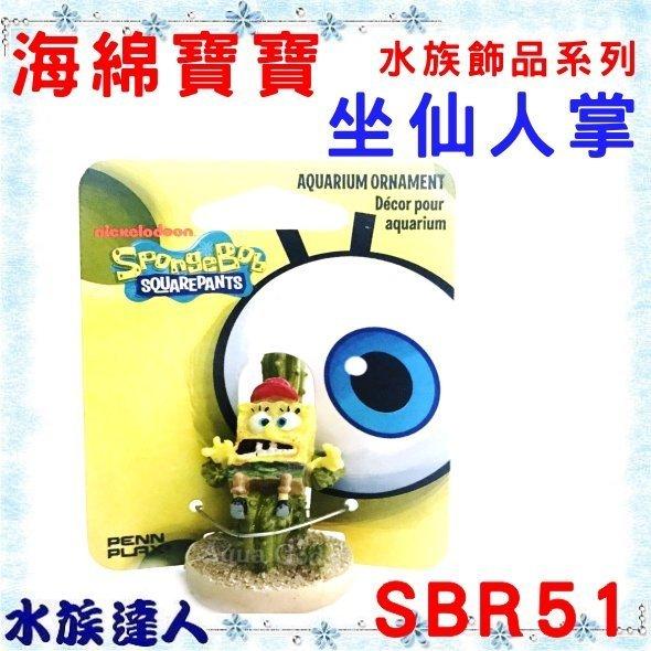 【水族達人】美國授權販售 PENNPLAX-龐貝《坐仙人掌  海綿寶寶  水族飾品系列 SBR51》裝飾 造景  公仔