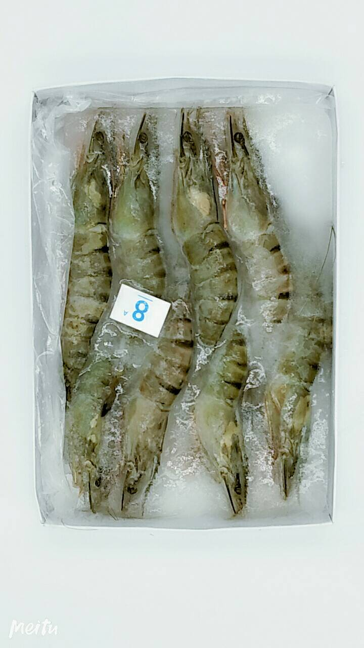 鮮凍8尾大草蝦   #300g