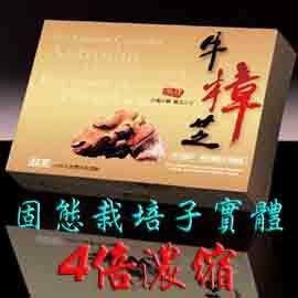 GMP廠生產有信譽保障~4倍濃縮牛樟芝子實體膠囊~牛樟靈芝樟芝王1盒60顆