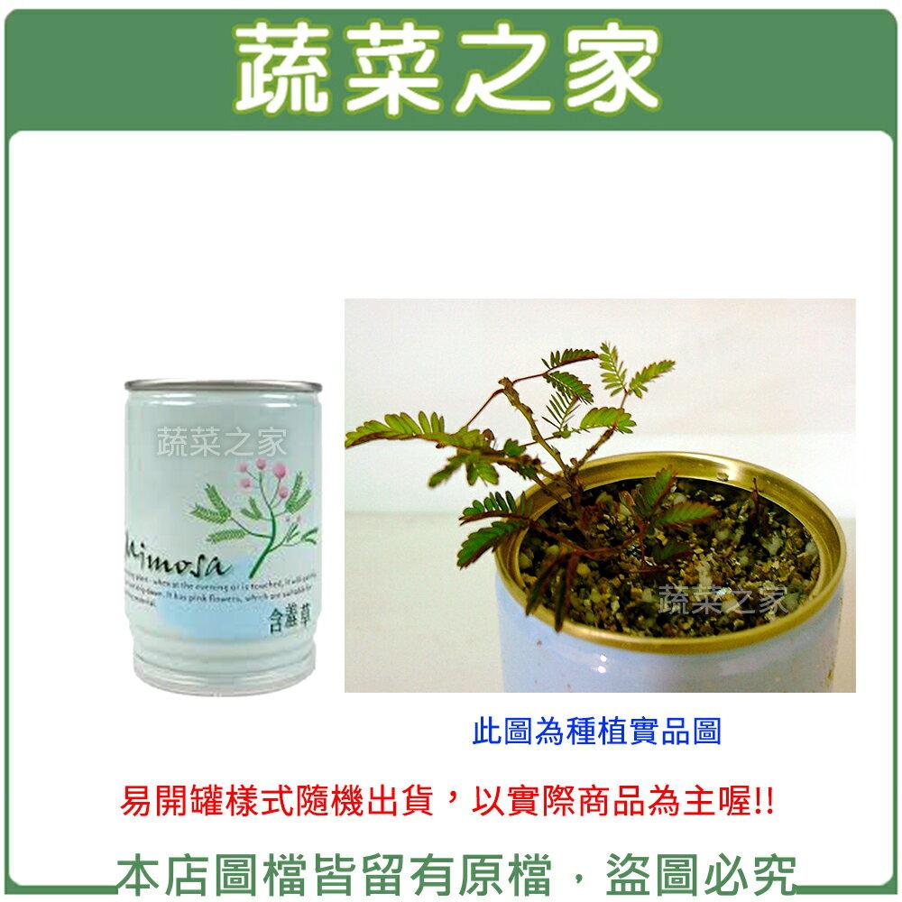 【蔬菜之家004-E14】iPlant易開罐花卉-含羞草