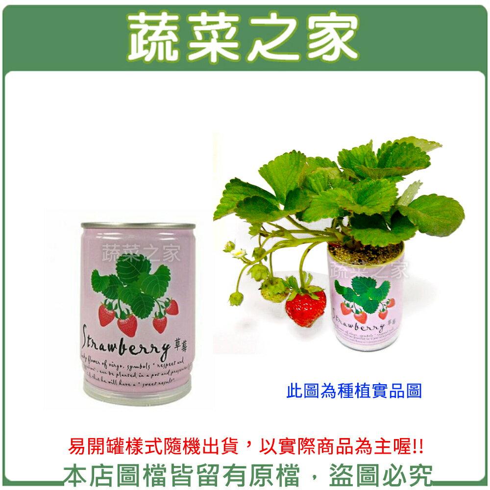 【蔬菜之家004-E13】iPlant易開罐花卉-草莓