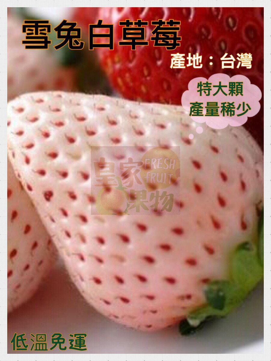 雪兔特大6~8入白草莓台灣產一盒/2盒/3盒/4盒/6盒【皇家果物】低溫免運