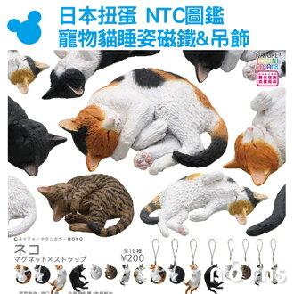 NORNS【日本扭蛋 NTC圖鑑 寵物貓睡姿磁鐵&吊飾】IKIMON轉蛋 貓咪 公仔 睡覺